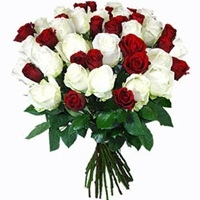 Red and White Roses-0