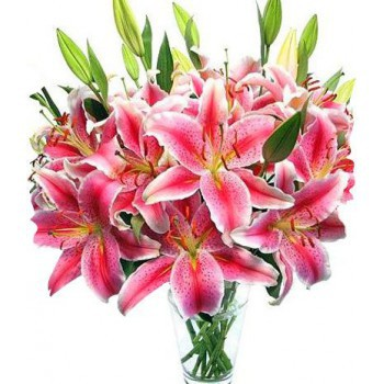 Pink Lily Flower Port