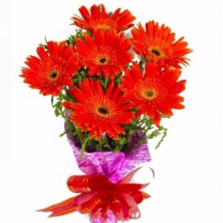 Red Gerbera Bouquet-0