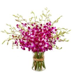 Pink Orchids Bunch